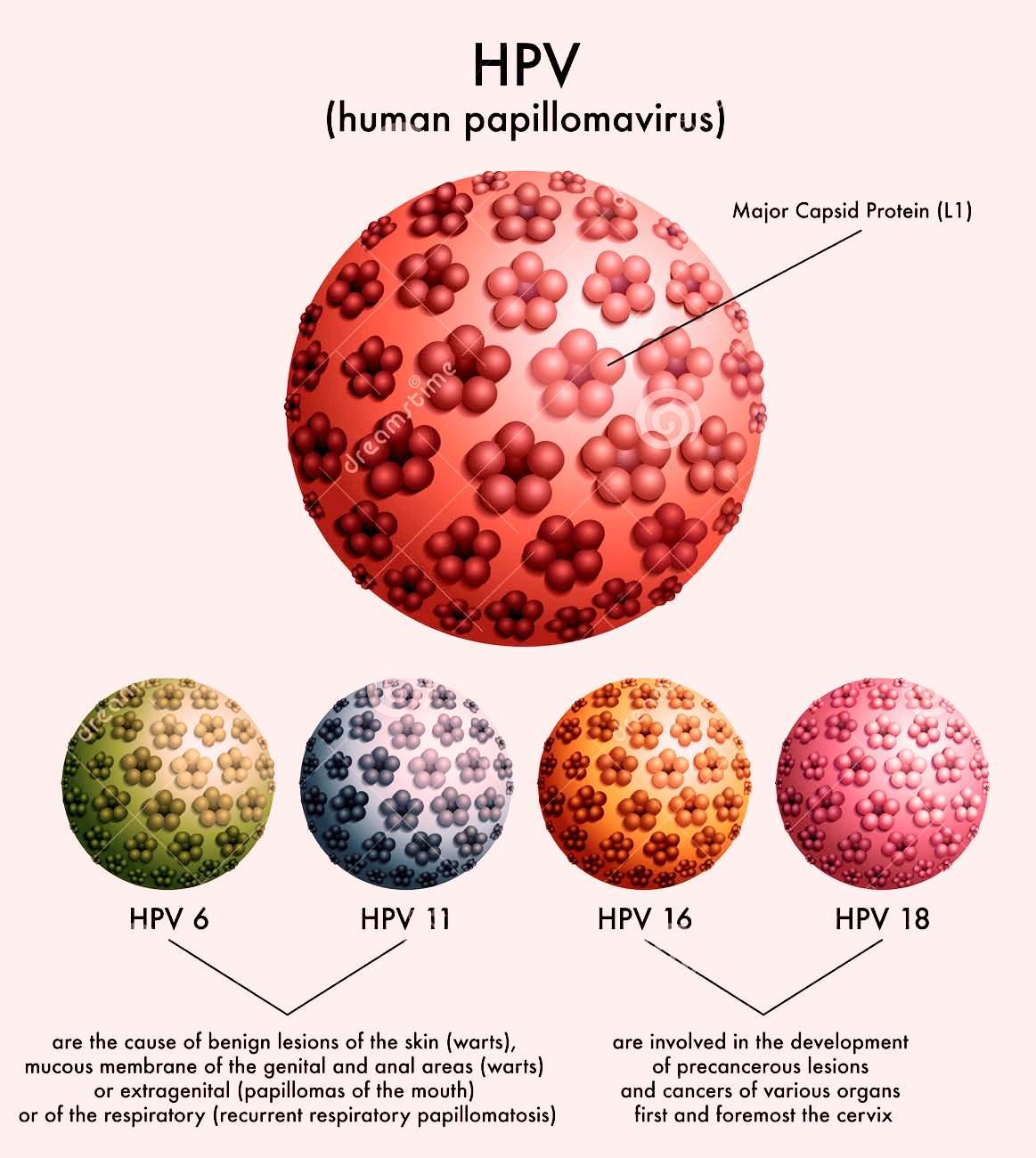 human papillomavirus and hiv