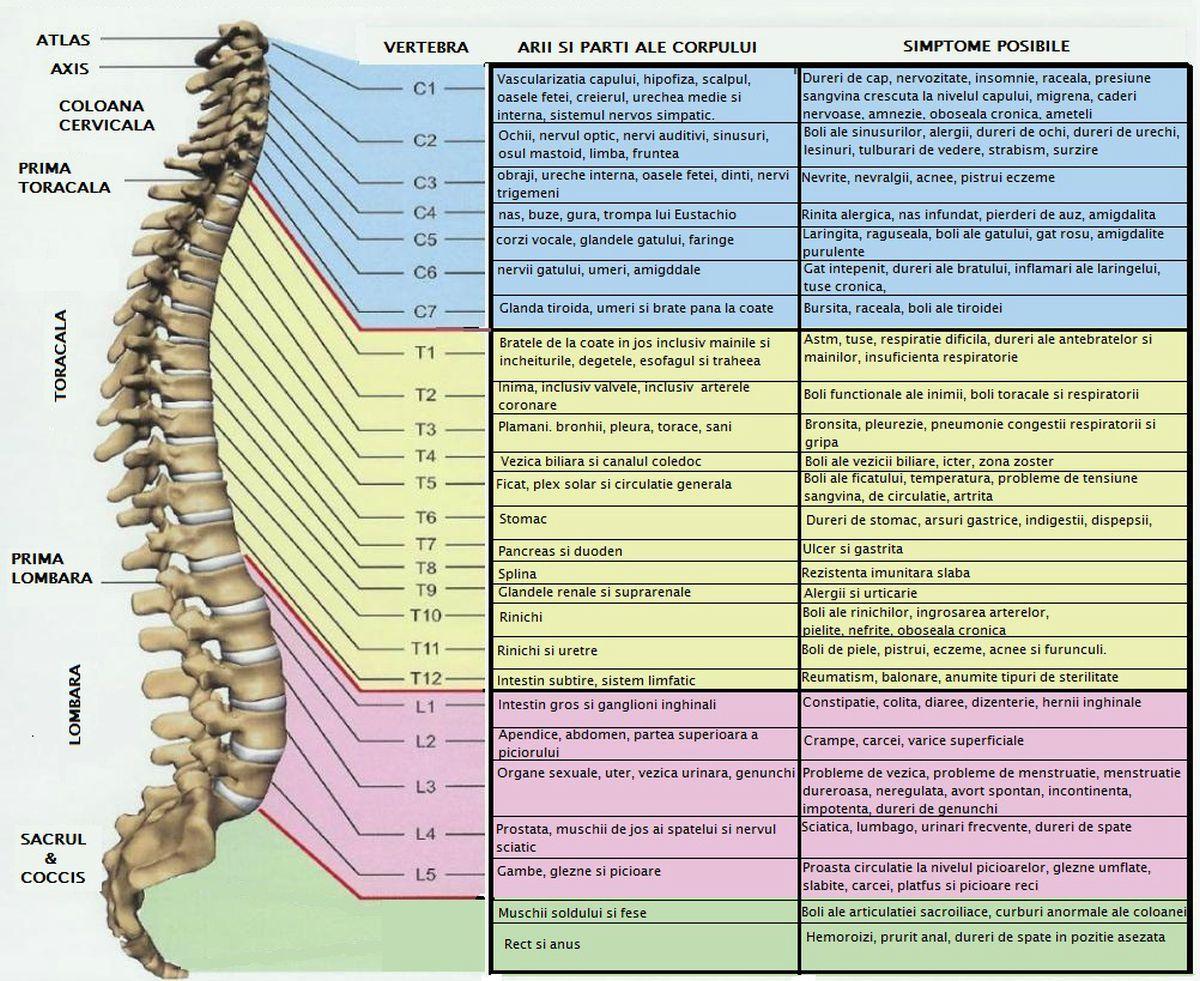 Tumorile coloanei vertebrale
