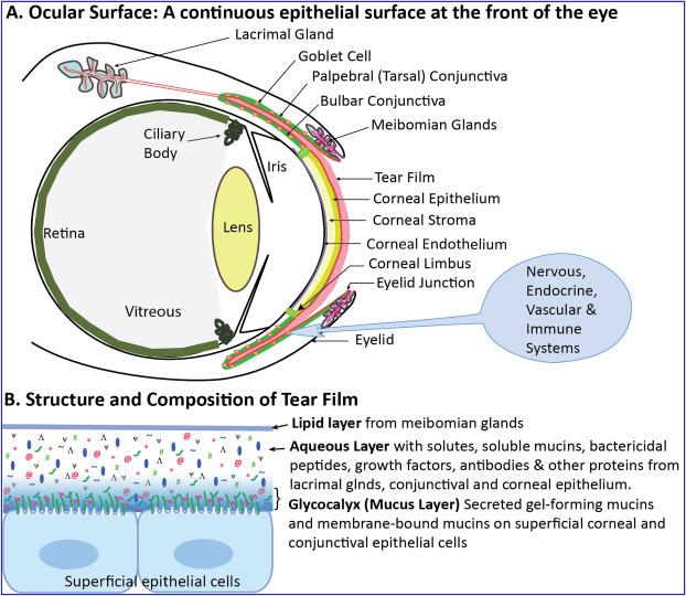 human papillomavirus in ocular surface diseases reticulated papillomatosis differential diagnosis