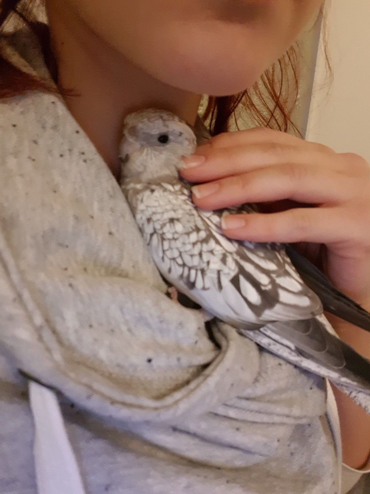 papillomatosis bird