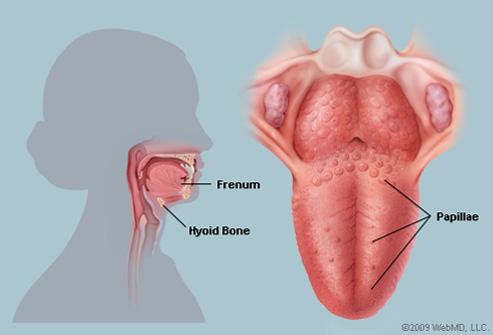 endocrine cancer uk retete de detoxifiere a organismului