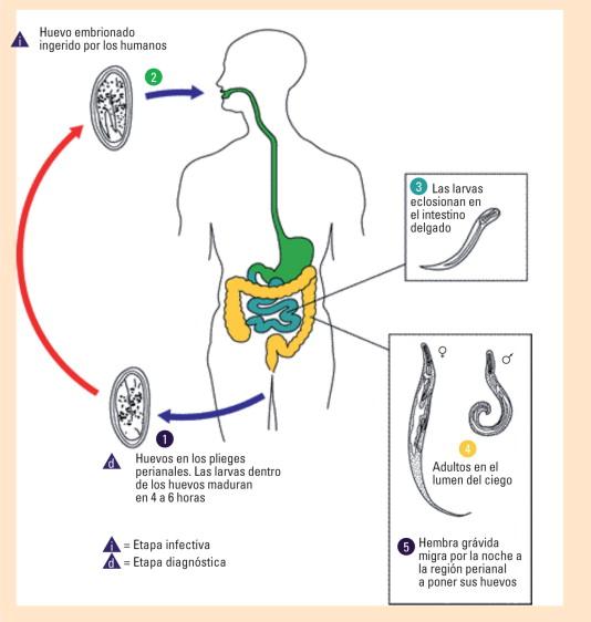 risultato positivo papilloma virus hpv symptomes bouche