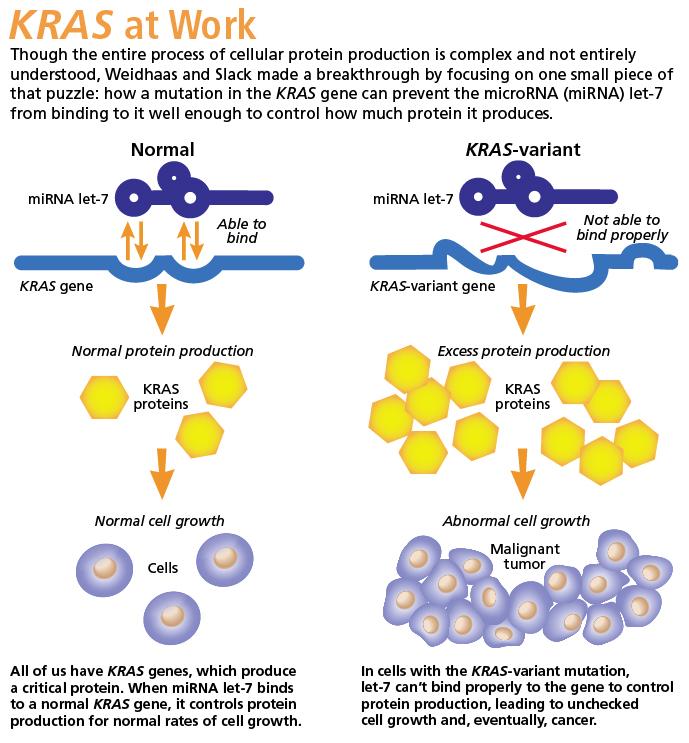 neuroendocrine cancer liver survival rate papiloma humano verrugas genitales tratamiento