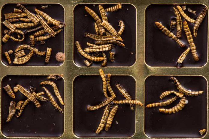 schema tratament paraziti intestinali que son los papilomas en el cuello