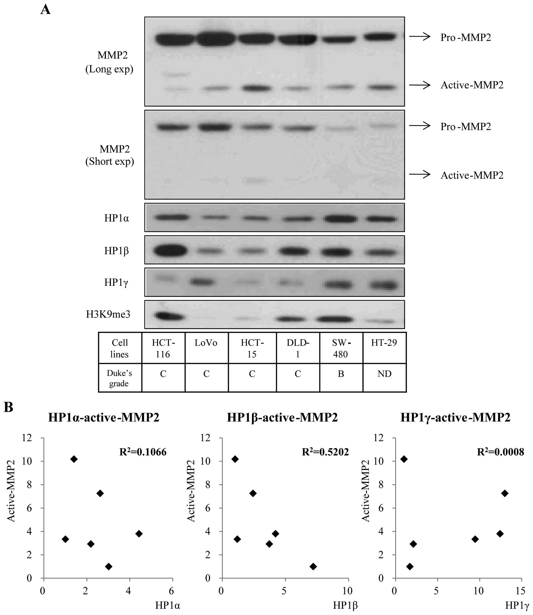 papilloma virus labbra sintomi papillomavirus type 16 homme