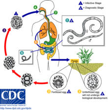 types of helminth diseases