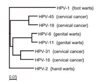 how do you get the papillomavirus