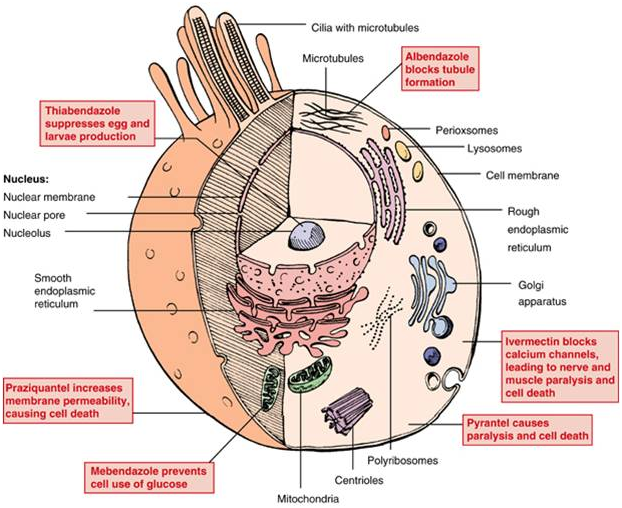 human papillomavirus hpv prevention