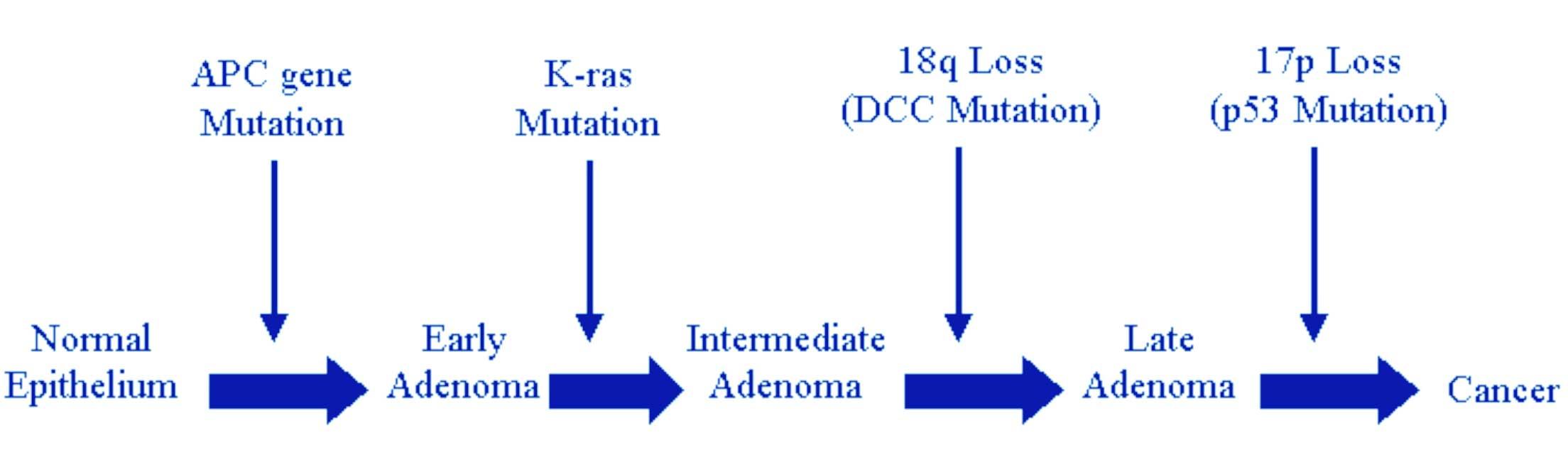 Cancer colorectal non-polipozic ereditar tip 1(HNPCC)-mutatii MSH2 | Synevo
