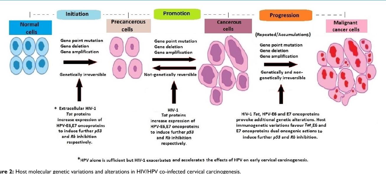 cancer testicular la copii parazit u telu sisara