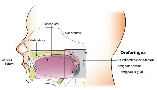 papiloma humano laringe