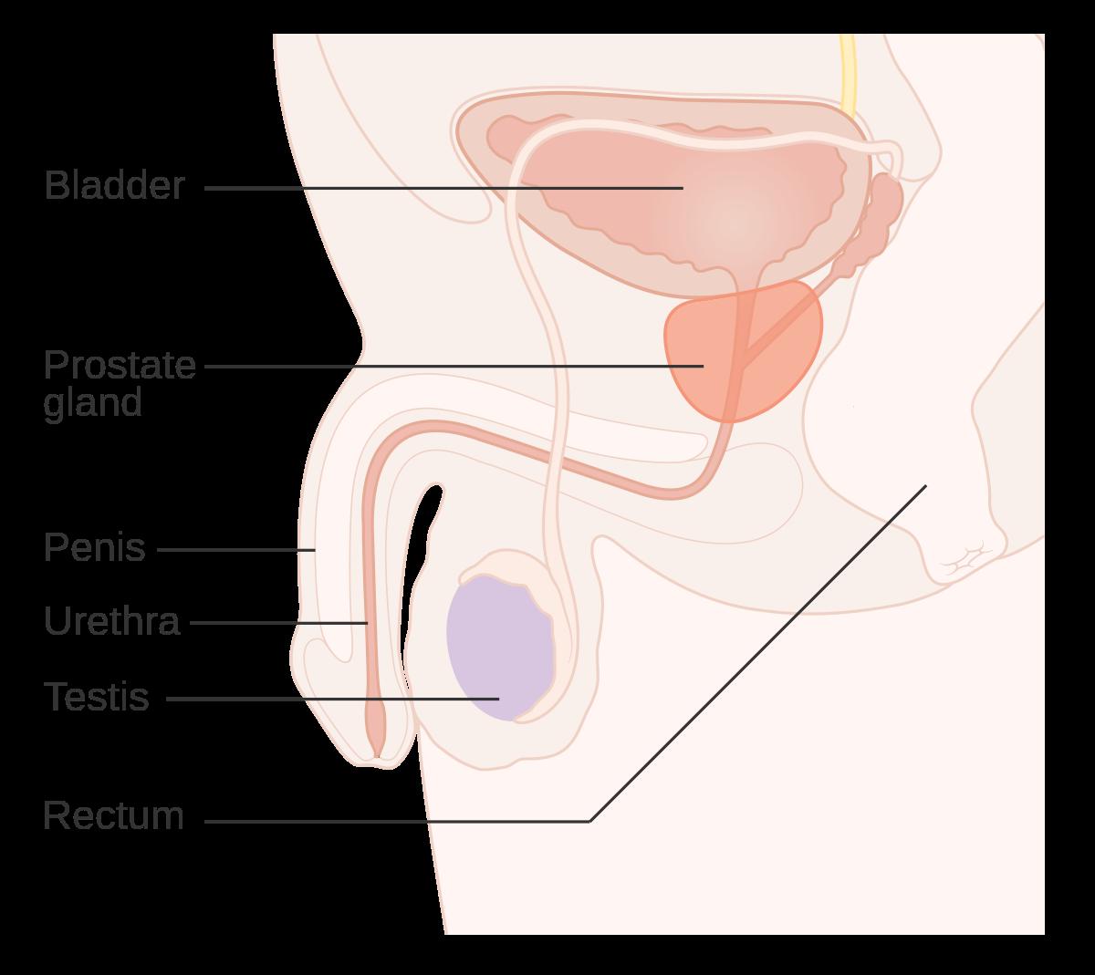 laryngeal papillomatosis pronunciation