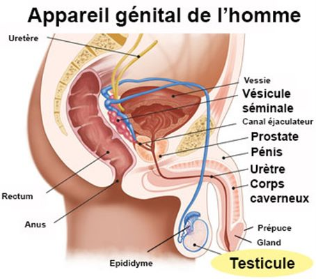 cancer testicule qui consulter helminth treatment and prevention