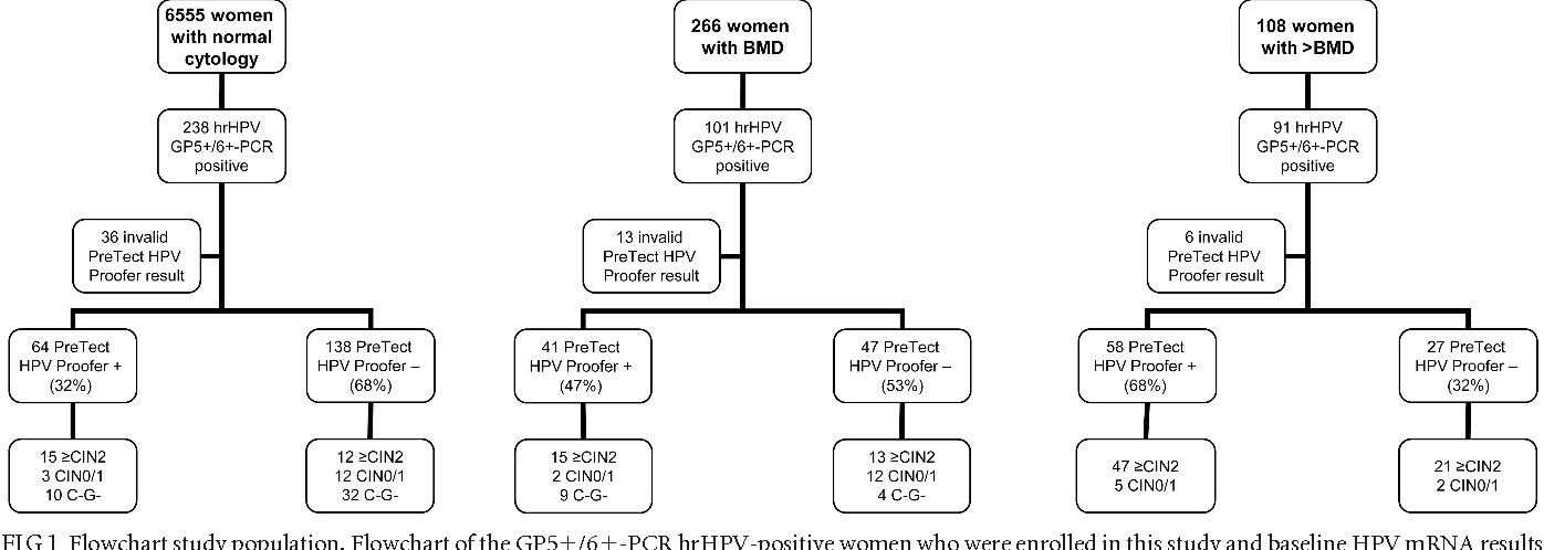 hpv high risk e6 e7 papiloma es cancer