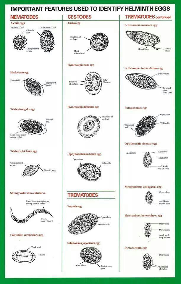 helminthic def papilloma virus primi sintomi