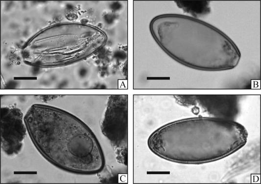 papilloma virus sul palato hpv cure in the future