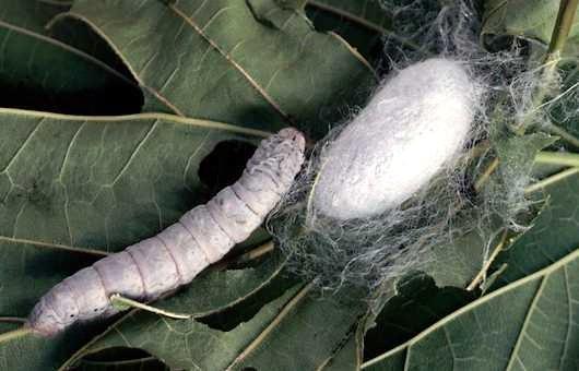 vierme alb in vis detoxifiere prin electroliza brasov