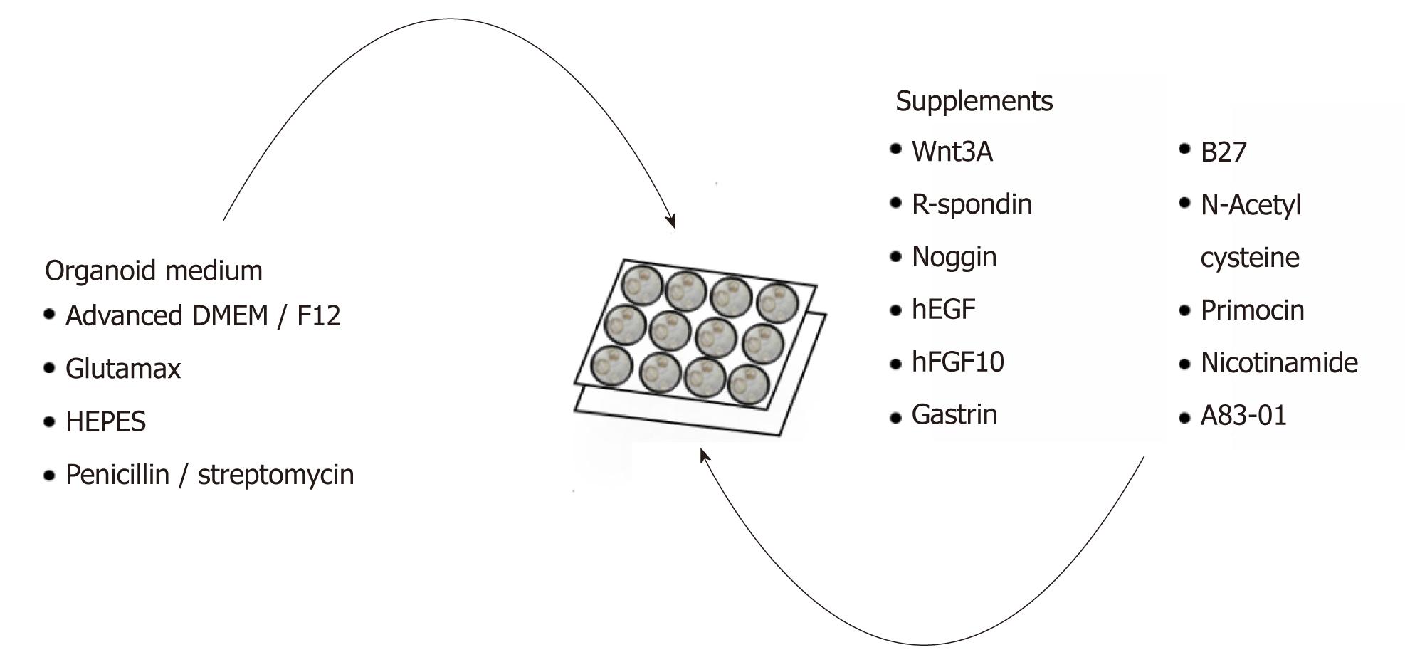 gastric cancer organoids