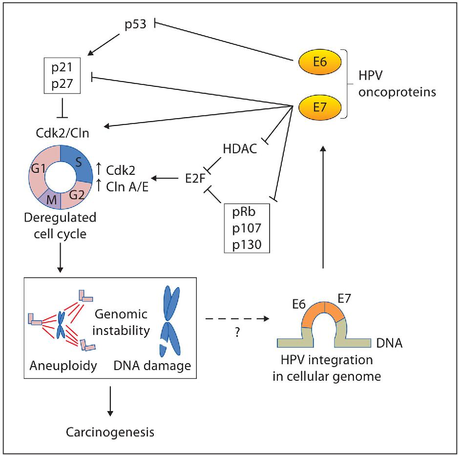 hpv wart cream cvs que significa virus del papiloma humano de alto riesgo