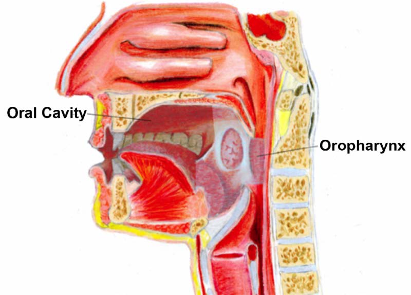 oropharyngeal human papillomavirus hpv))