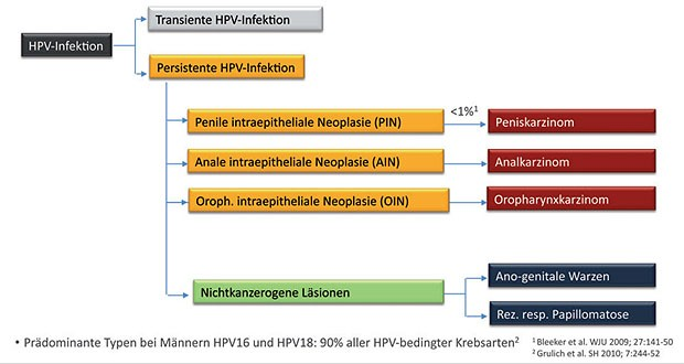 hpv impfung manner nach infektion bacterii lactozo pozitive