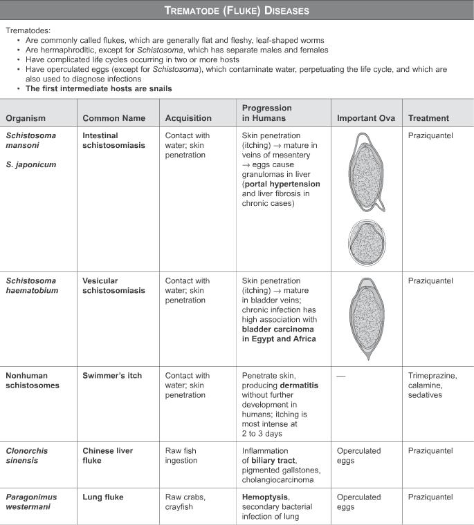 schistosomiasis step 1