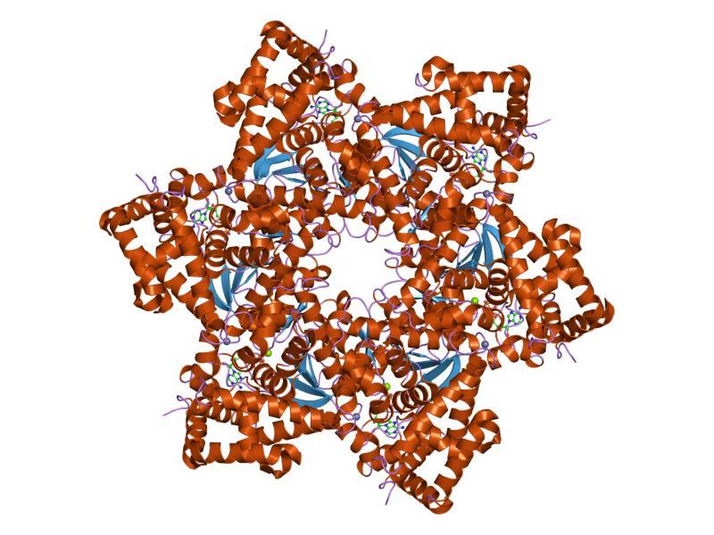 virus papiloma humano tipo 2
