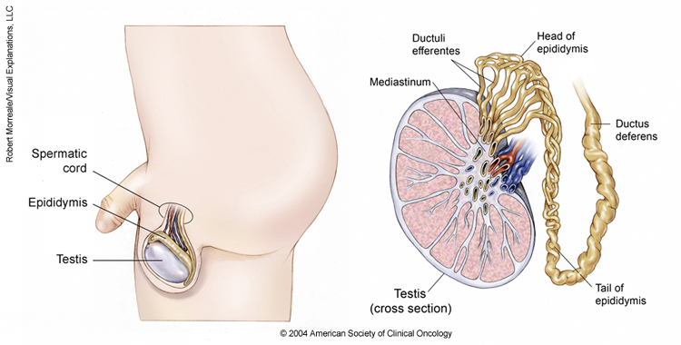 hpv 16 base of tongue cancer virus cause human papillomavirus