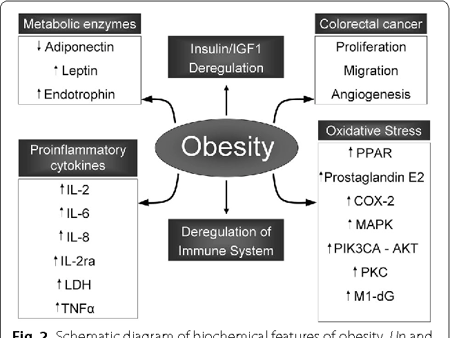 colorectal cancer and obesity doencas helmintos