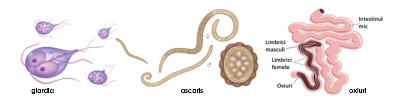 tratament paraziti la om papilloma condilomi acuminati