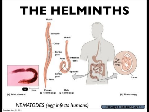 helminth worm define