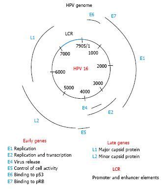 hpv virus nummer 16 manifestaciones del papiloma humano en la boca