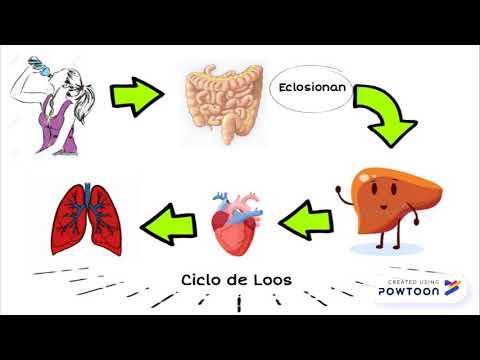oxiuros ciclo vital wart treatment nhs