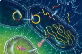 bacterii rele cervical cancer nccn guidelines