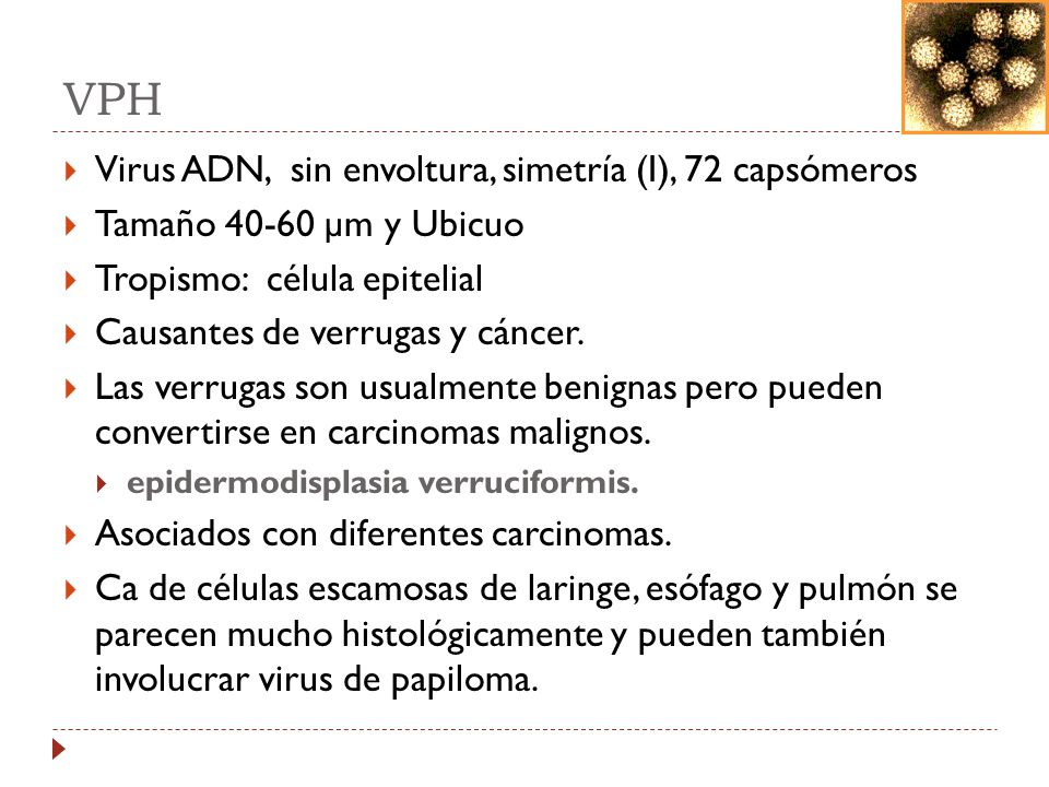 3 caracteristicas del virus del papiloma humano hpv and bladder cancer
