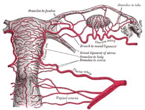 respiratory papillomatosis risk peritoneal cancer pain