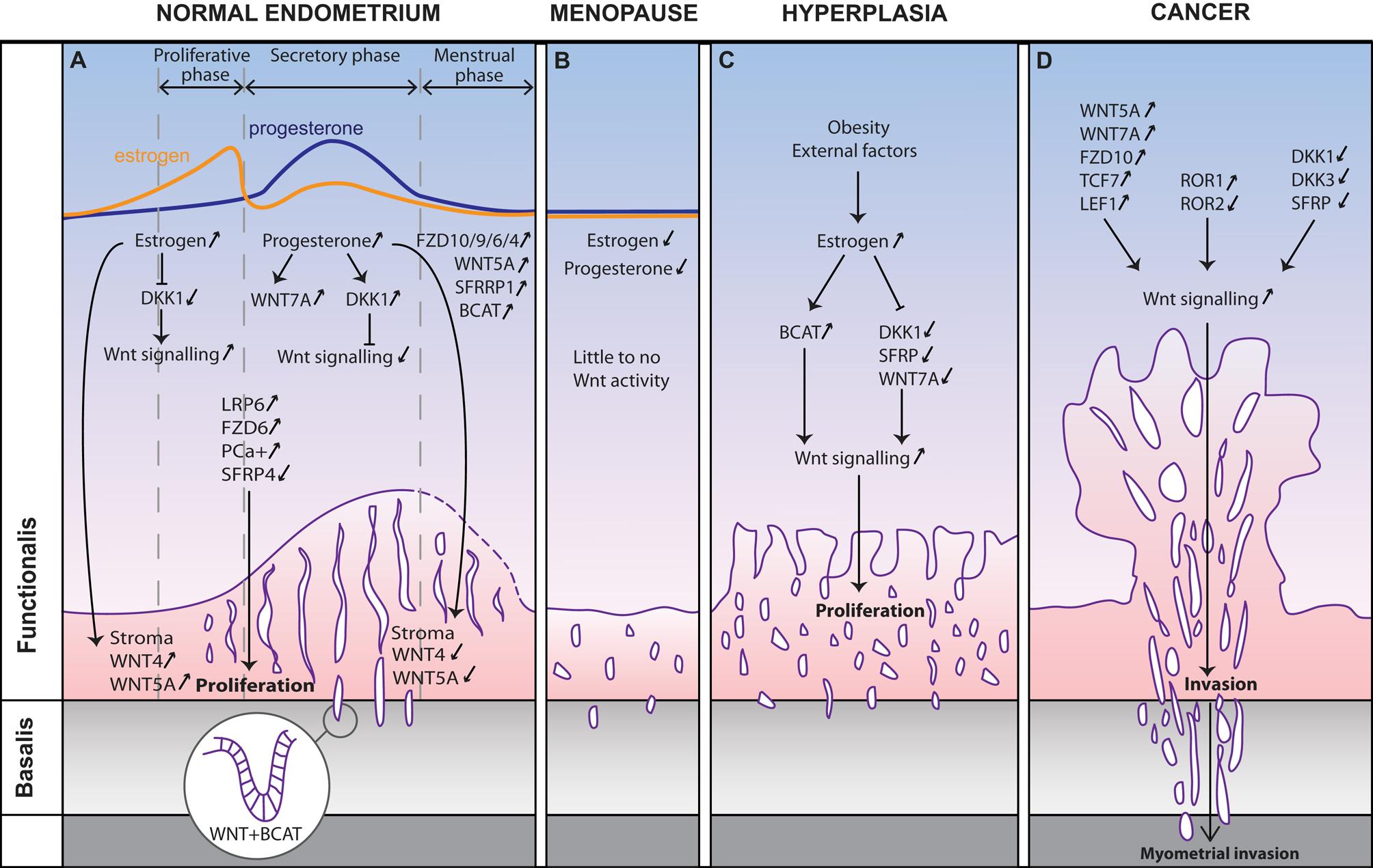 uterine cancer on progesterone