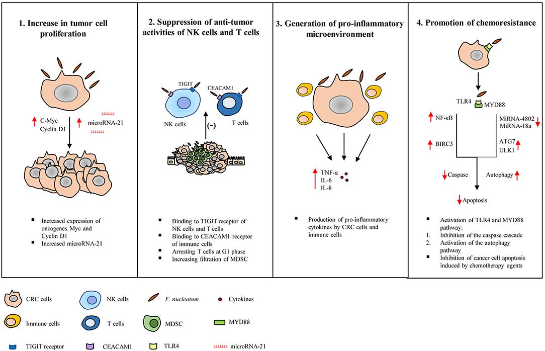 f colorectal cancer papillomavirus comment guerir