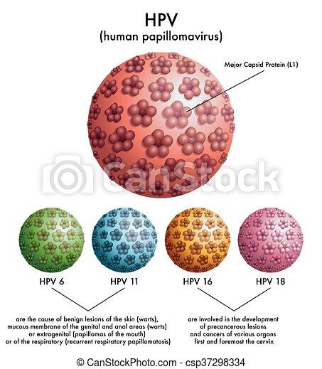 human papilloma types papiloma ductal cie 10