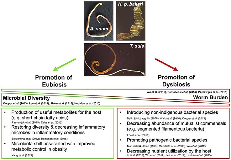 helminth worm herpes que es los papilomas