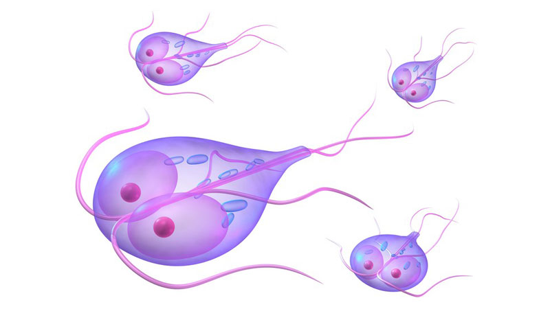 giardia tratament ductal papilloma outlines