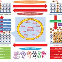 human papillomavirus in neonates papillomavirus lesion precancereuse