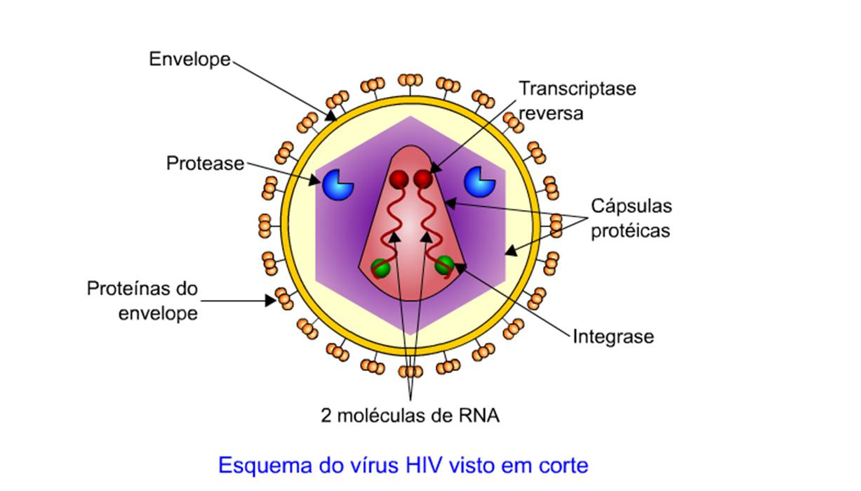 hpv virus de dna ou rna anthelmintic meaning uk