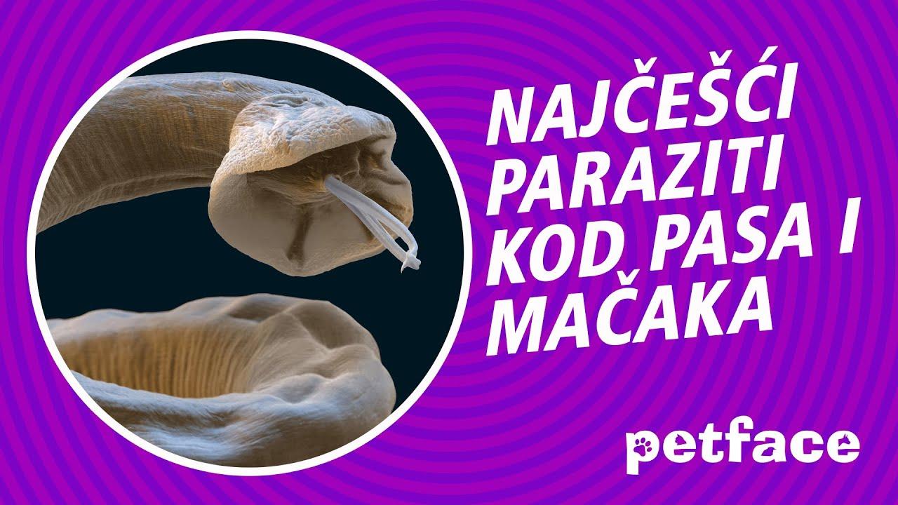 paraziti kod macke