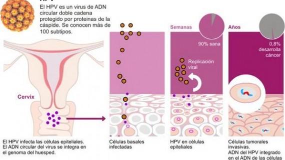 herpes genital papiloma humano