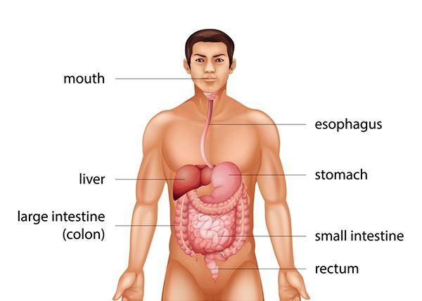 rectal cancer or bowel porque da virus del papiloma humano en mujeres