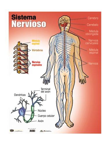 cancer de prostata sintomas paraziti intestinali anxietate
