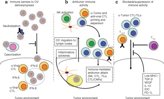 papillomavirus oncolytic virus cancerul pulmonar cauze