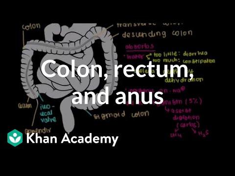 colorectal cancer khan academy detoxifiere ionica pret