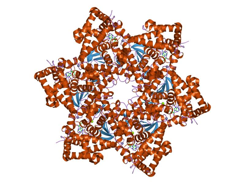 virus papiloma humano oncogenicos papillomatosis confluent et reticularis